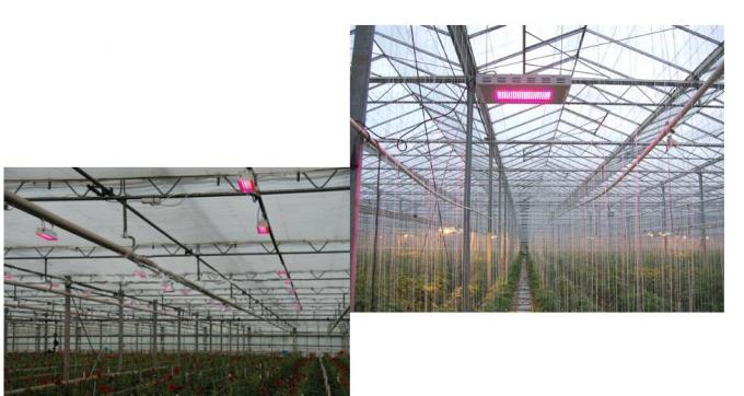 600 W Panel led grow light replacement 1000W HID/HPS , Complete spectrum