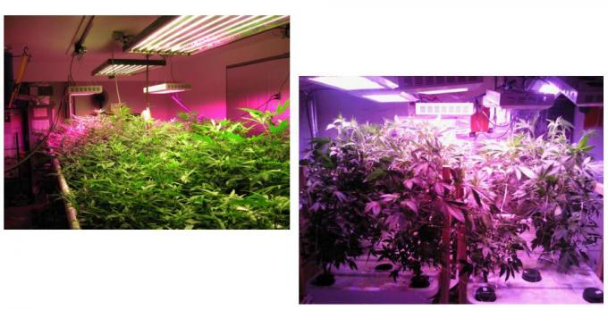 Full Spectrum indoor Grow led lights, ETL certificated for plants grow
